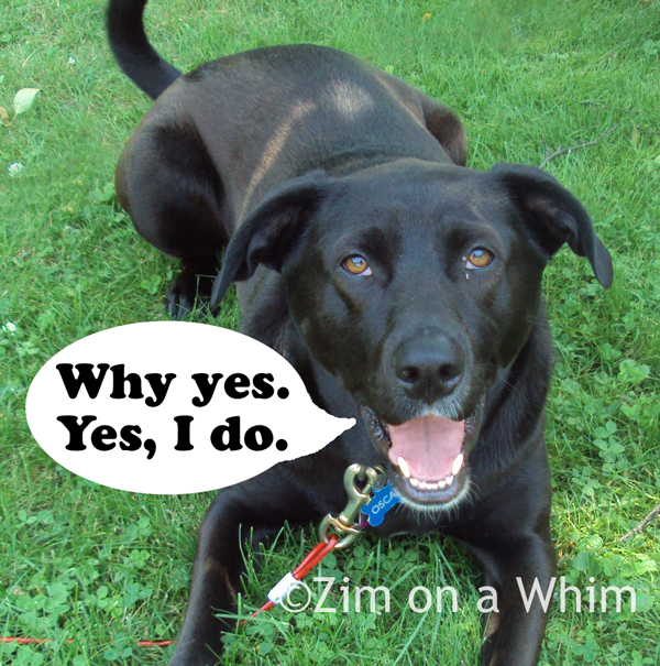 Ready for Pupsicles! | Zim on a Whim
